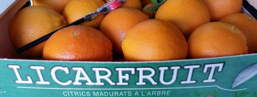 naranja-chislett-summer-navel