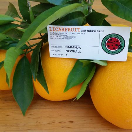 naranja-newhall